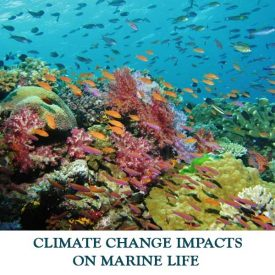 CLIMATE-CHANGE-IMPACTS-ON-MARINE-LIFE