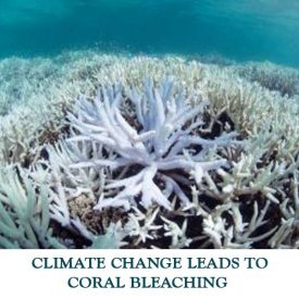 CLIMATE-CHANGE-LEADS-TO-CORAL-BLEACHING
