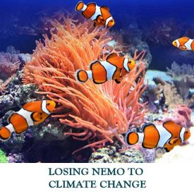 LOSING-NEMO-TO-CLIMATE-CHANGE